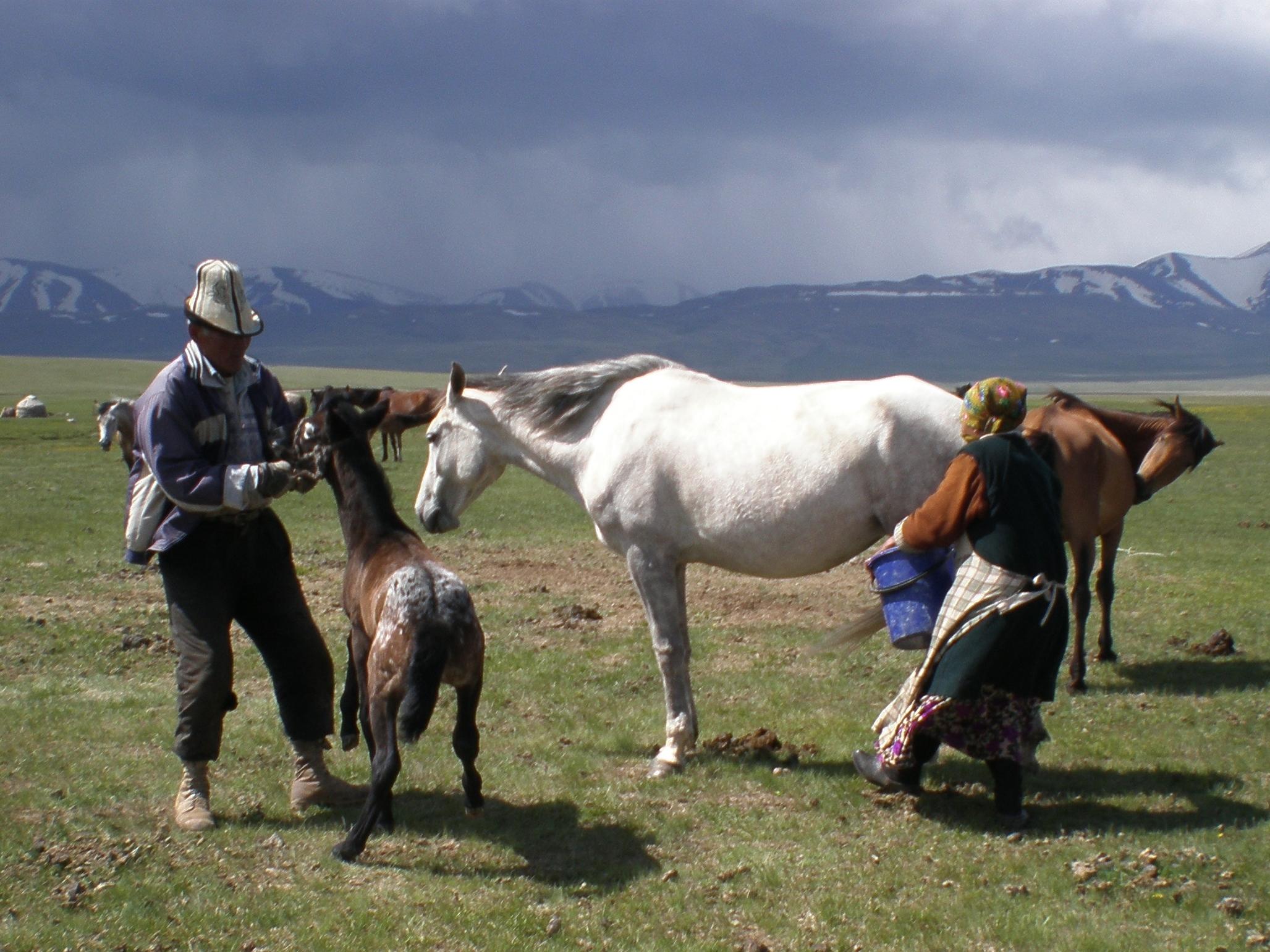 mare milking in Kirgyzstan