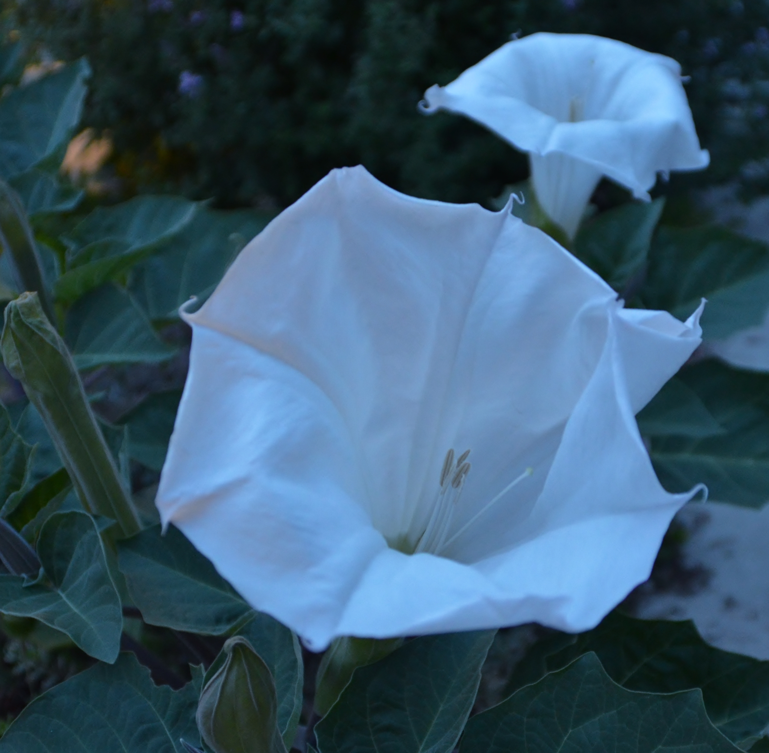 Night Flowers – A New Day Living Life Almost Gracefully