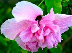 florida flowers 018