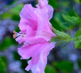 florida flowers 032