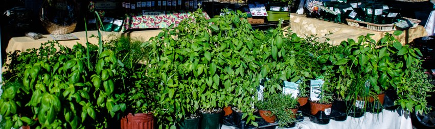 Naples Farmer's Market 023