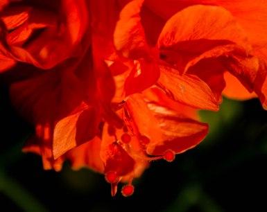 florida flowers 011 (2)