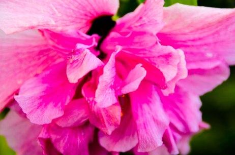 florida flowers 016