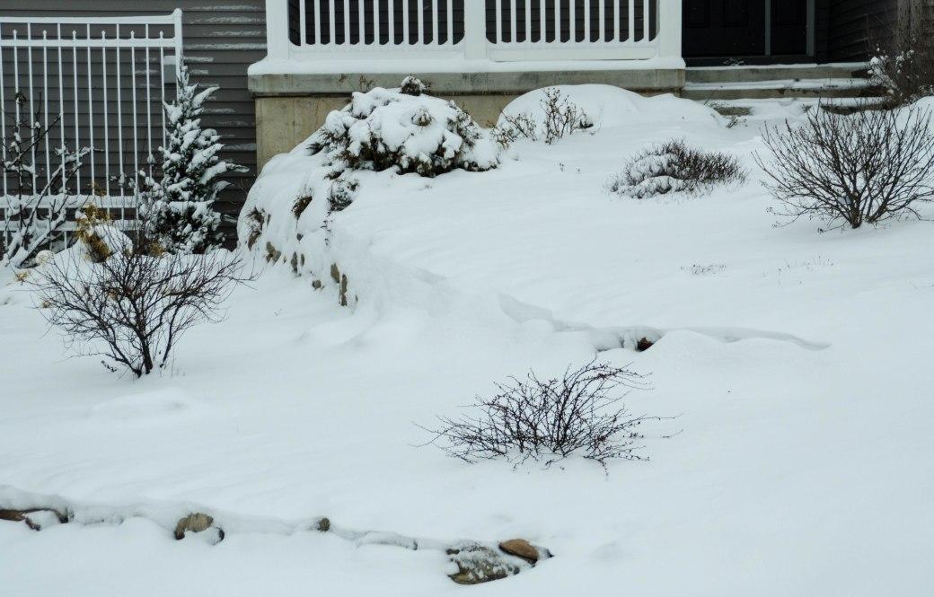 Winter Garden Under a Snow-Down Cover