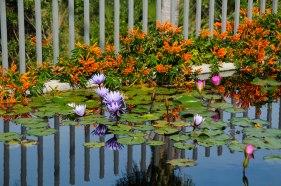 Botanical Gardens 095