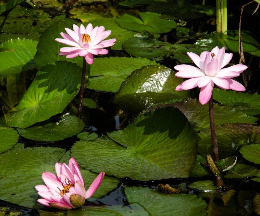 Botanical Gardens 133
