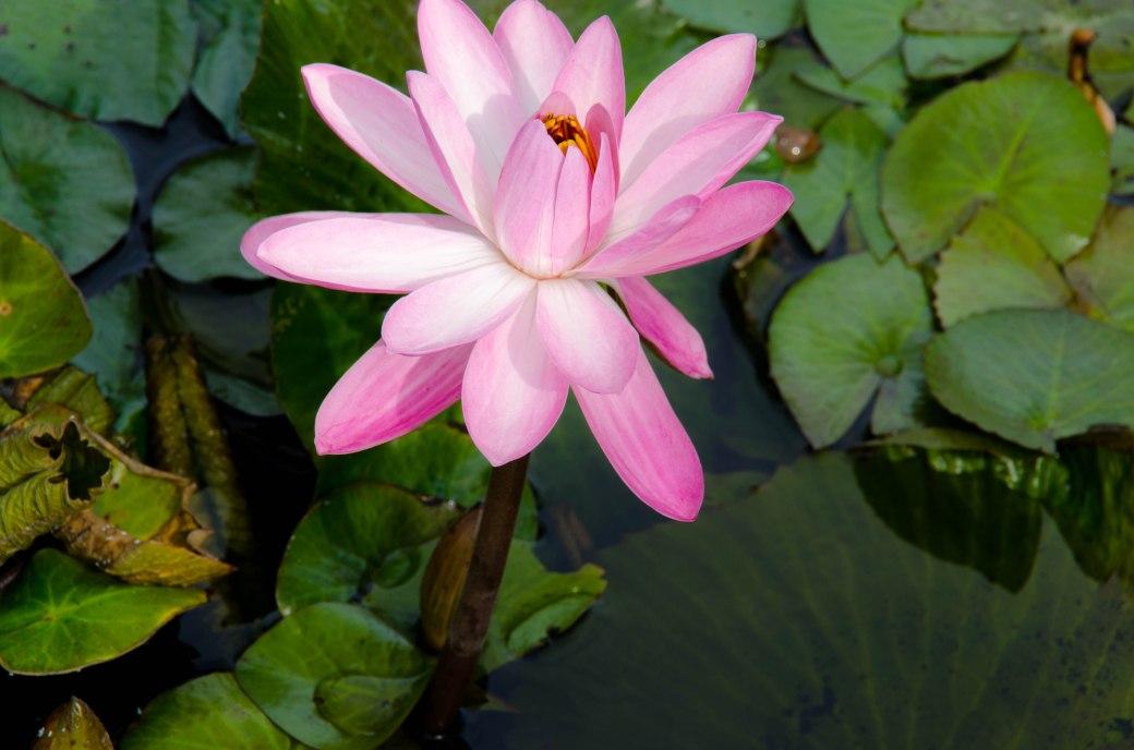 Botanical Gardens 138