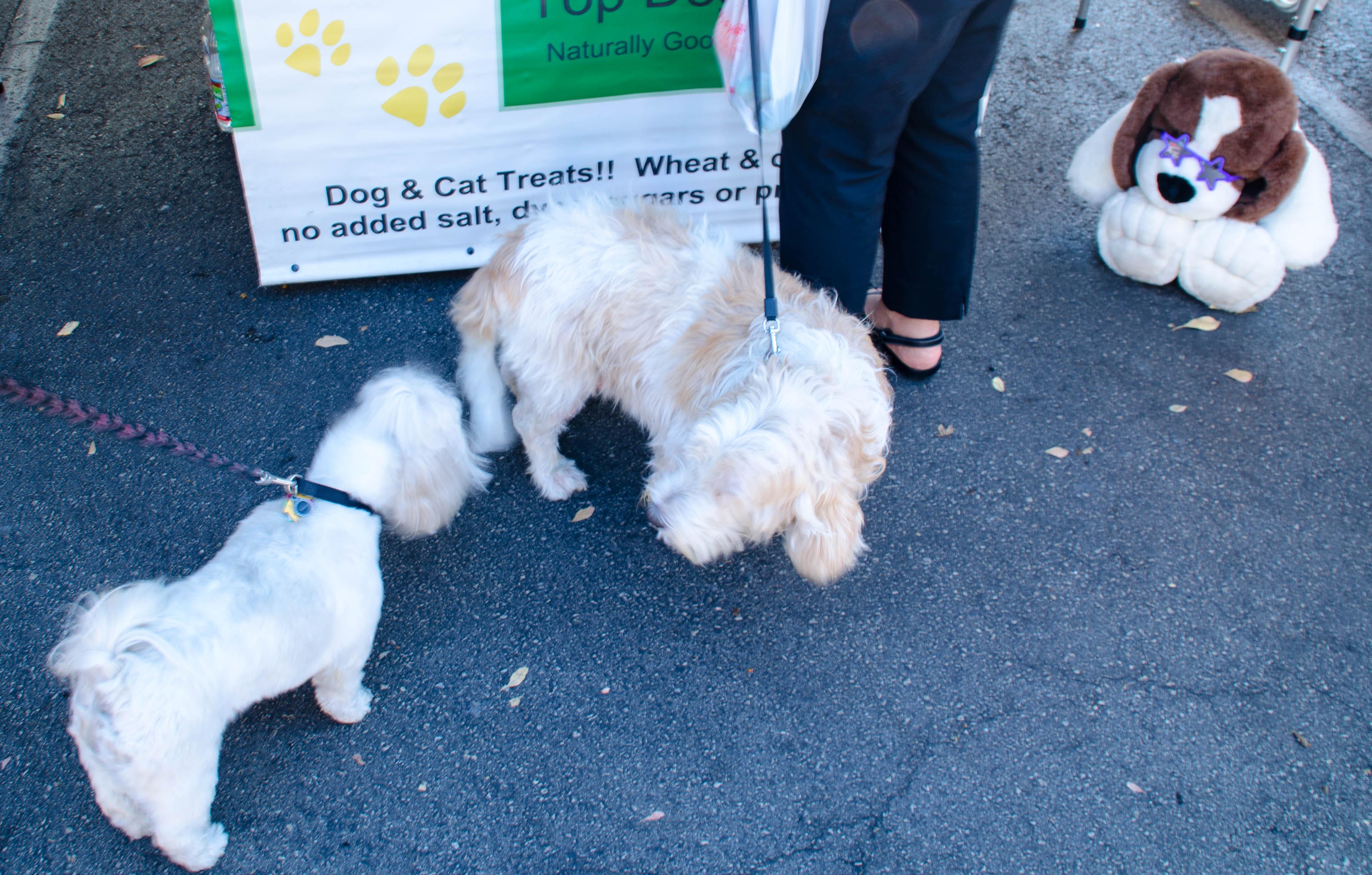 farmers market dogs 006
