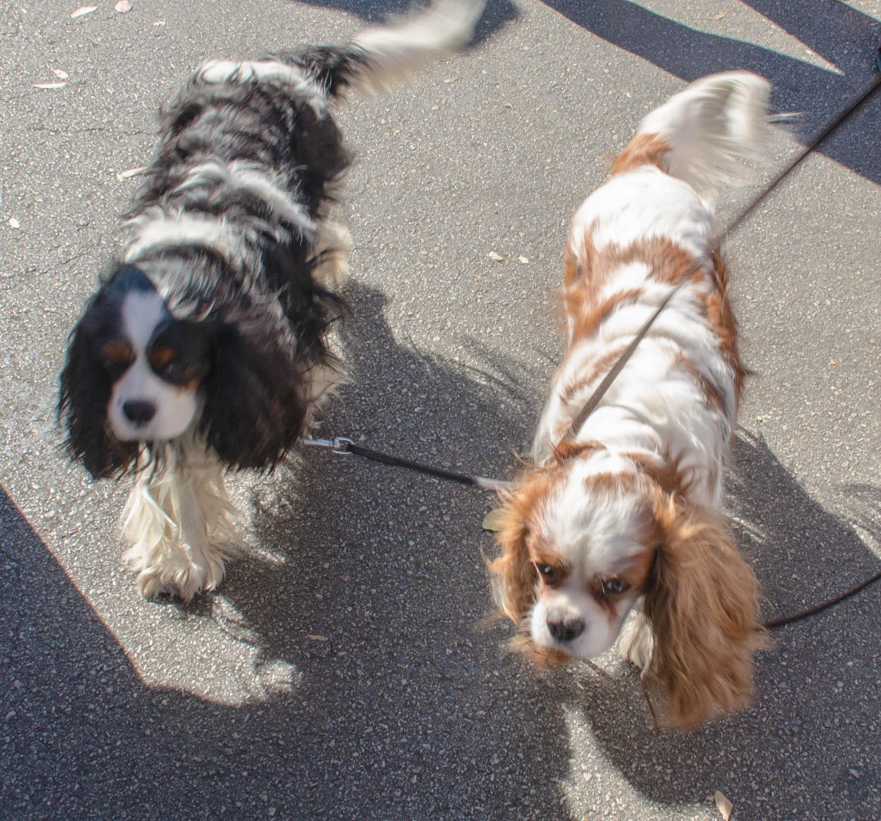 farmers market dogs 009