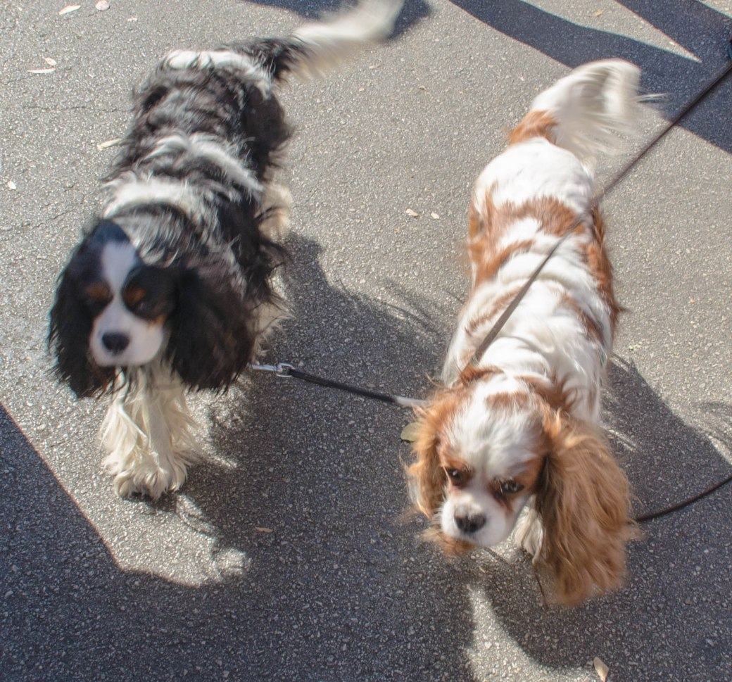 farmers market dogs 009