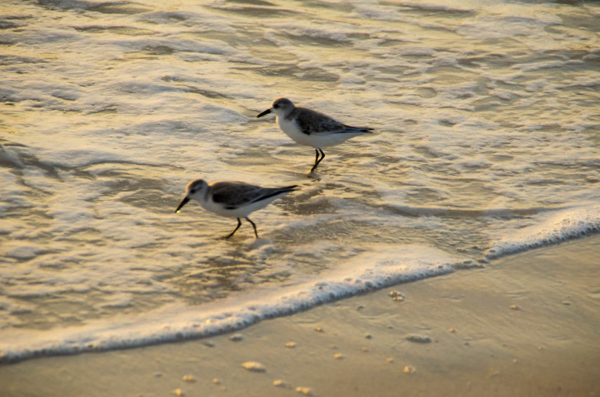 barefoot beach 002