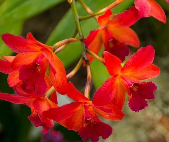 Botanical Gardens 020