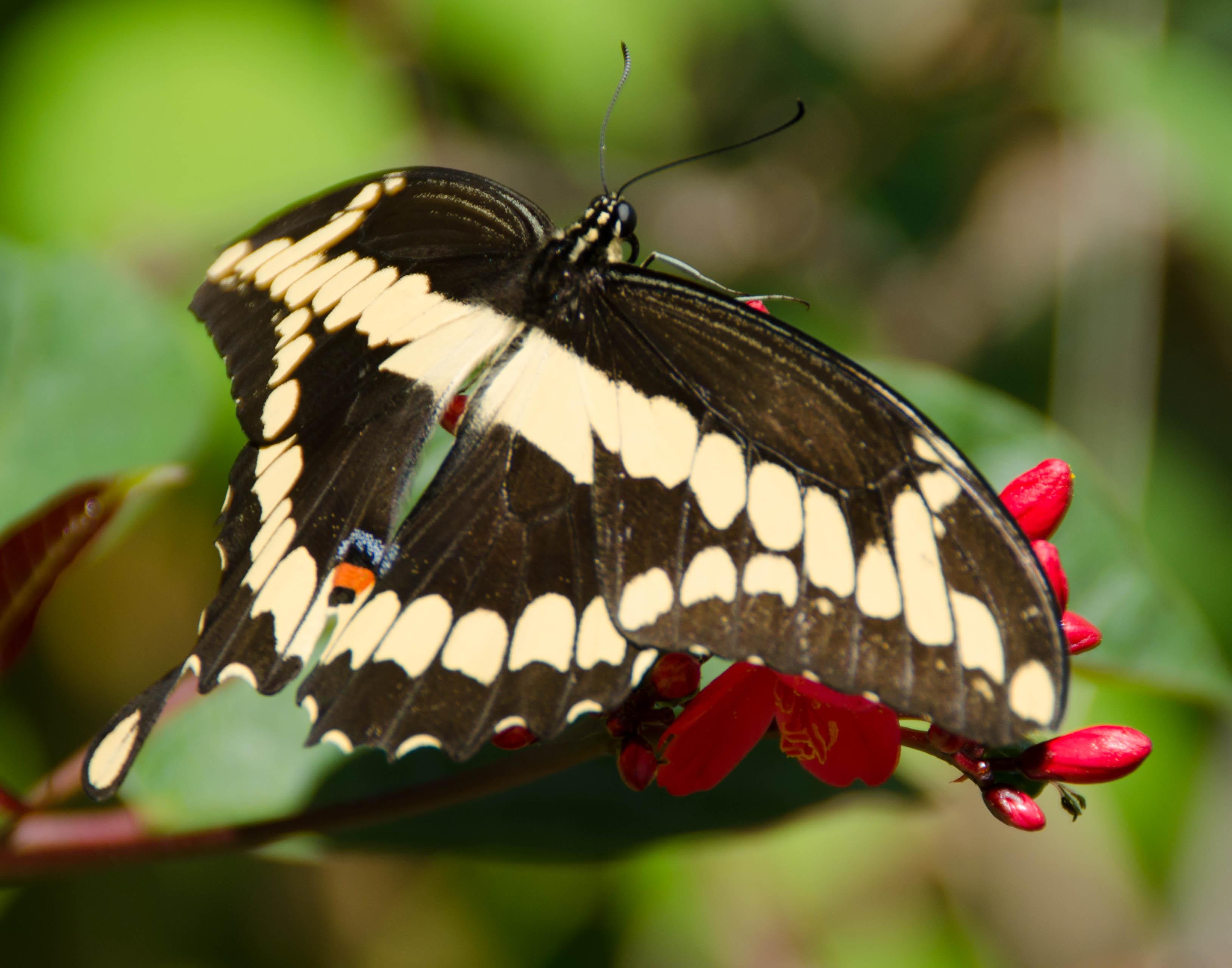 botanical gardens 340