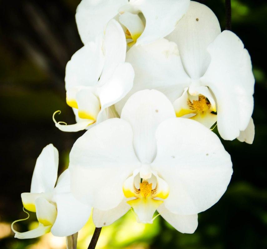 botanical gardens 385
