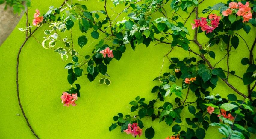 Botanical Gardens 260