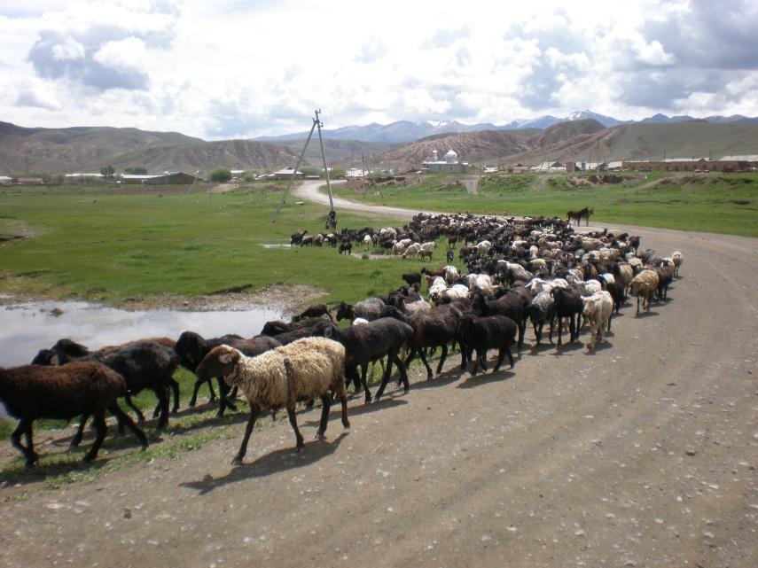 Sharing the road - outside Bishkek, Kyrgyzstan