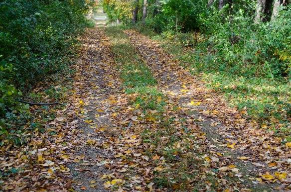 walk in the woods 063