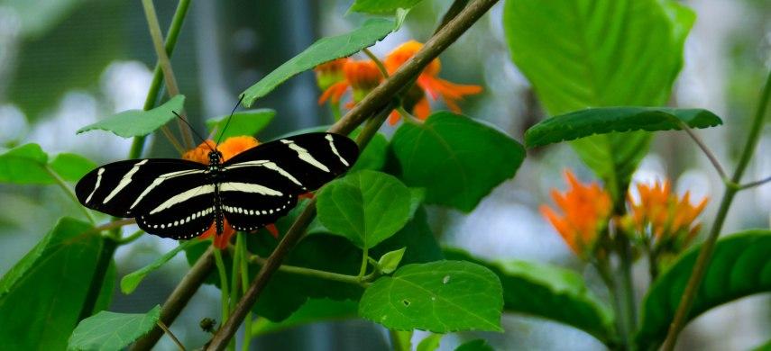 botanical garden 038