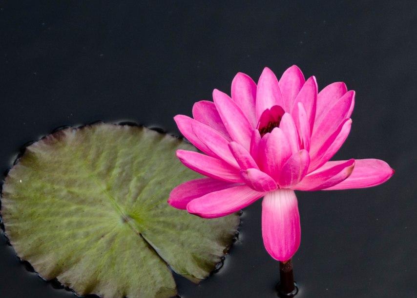 botanical garden 092