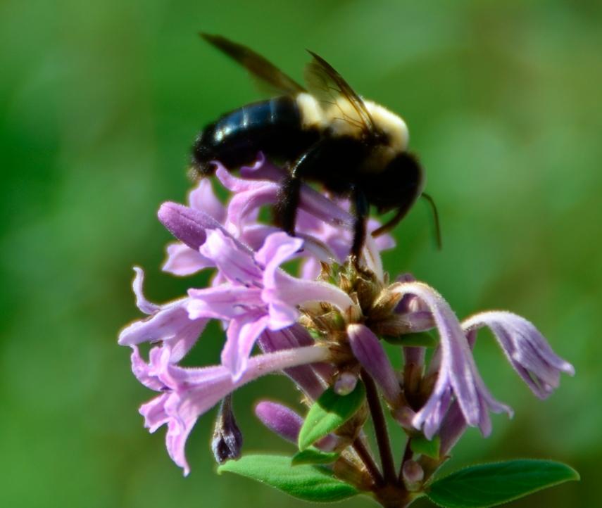 butterflies & bees 004