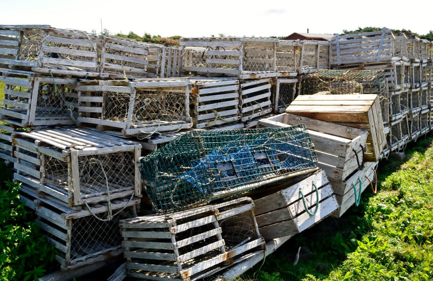 Lobster traps on Newfoundland.