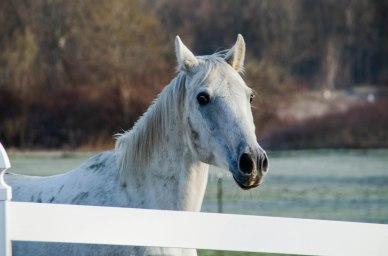horse 002