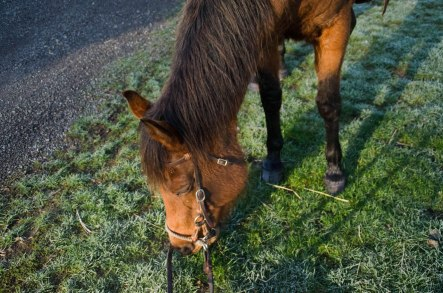 horse 024