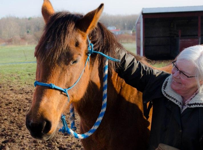 horse 050