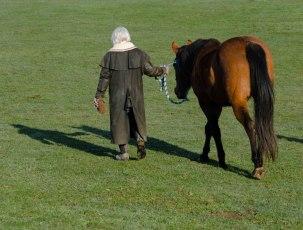horse 053