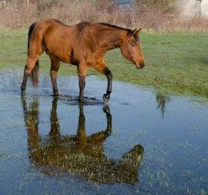 horse 082