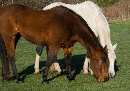 horse 099