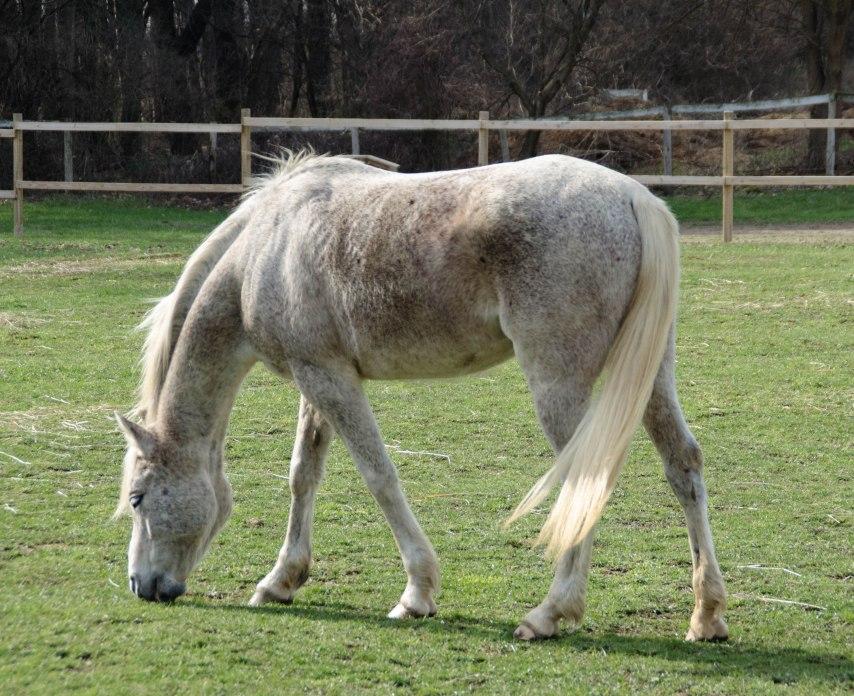 horses 021