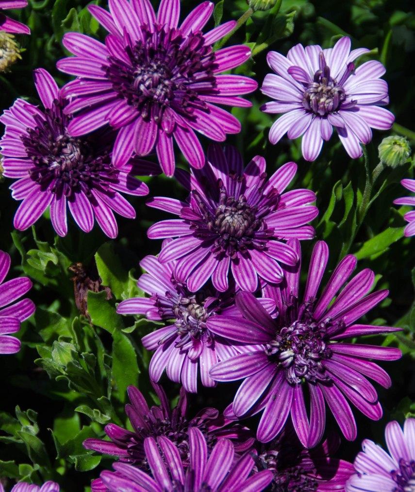hot flowers 051