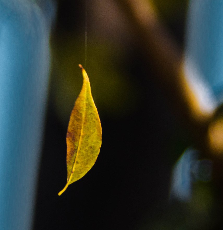 leaf 045