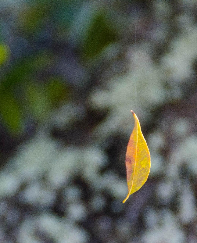 leaf 046