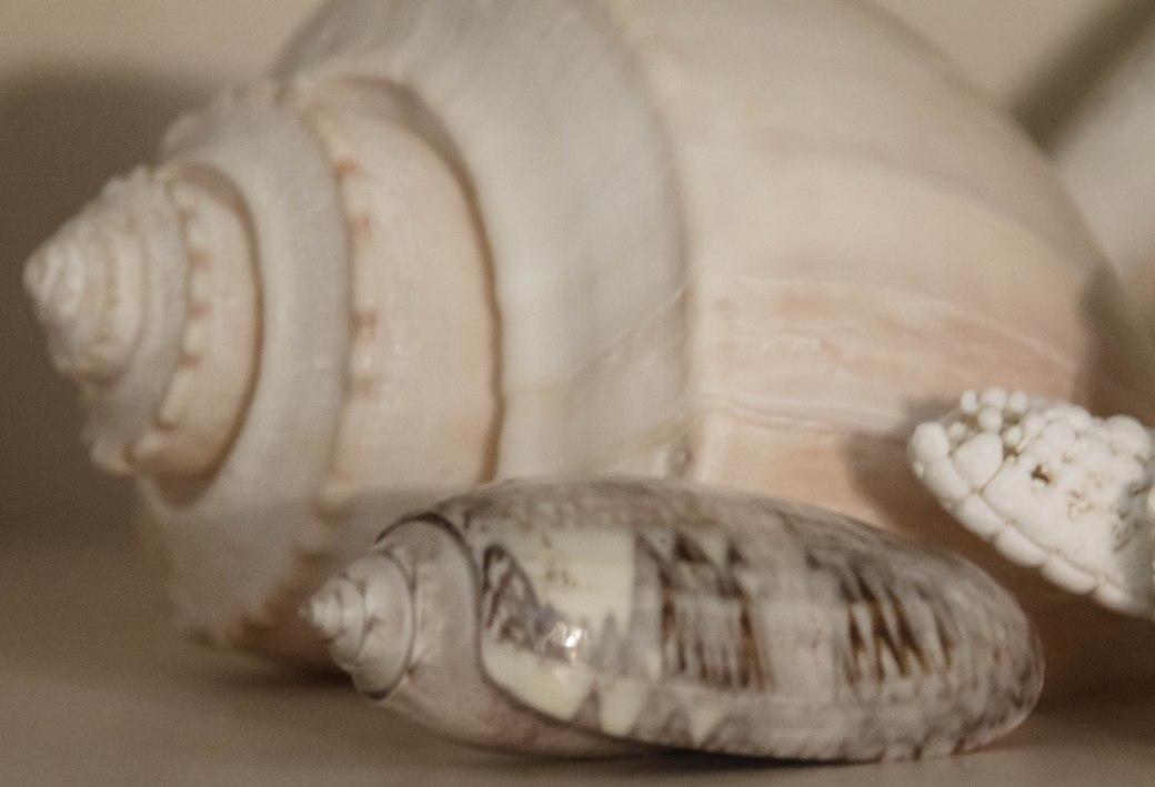 shells 029