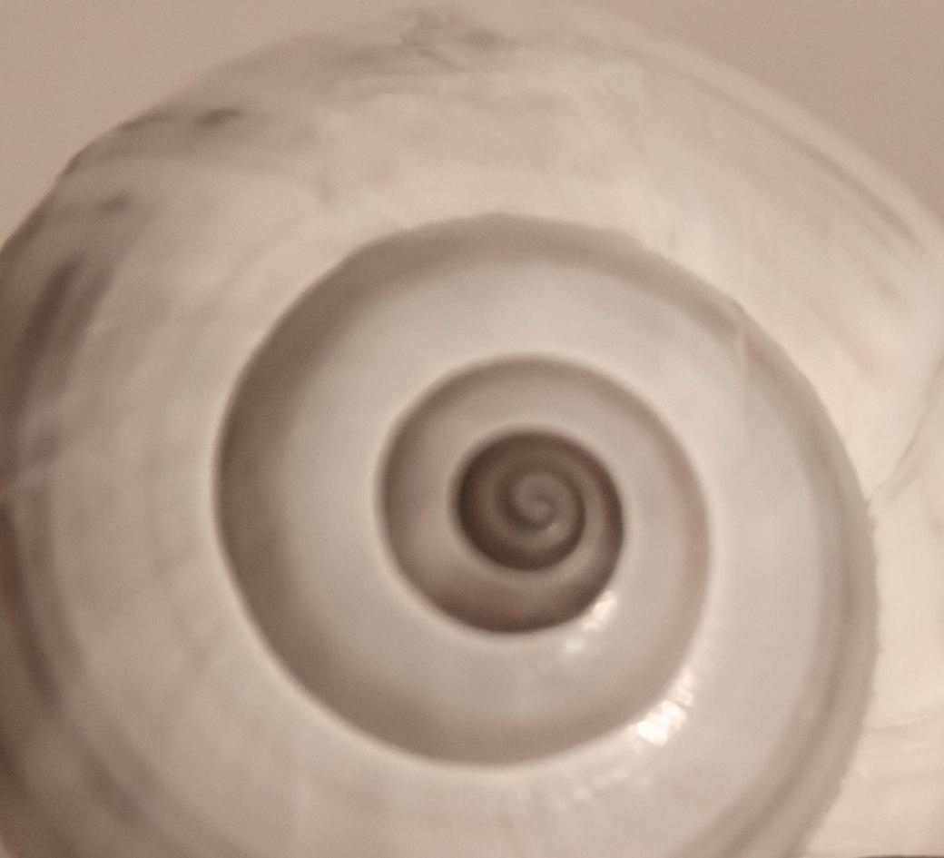 shells 040