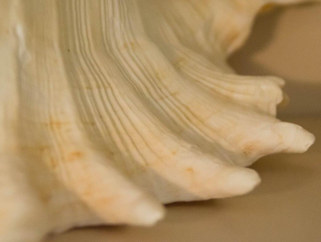 shells 044