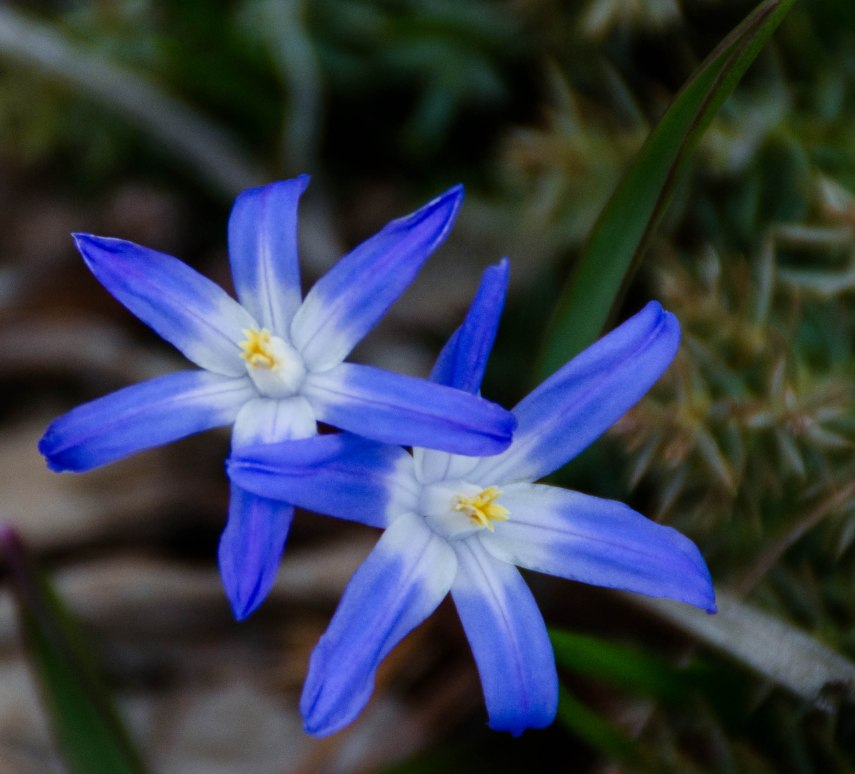 spring walk 043
