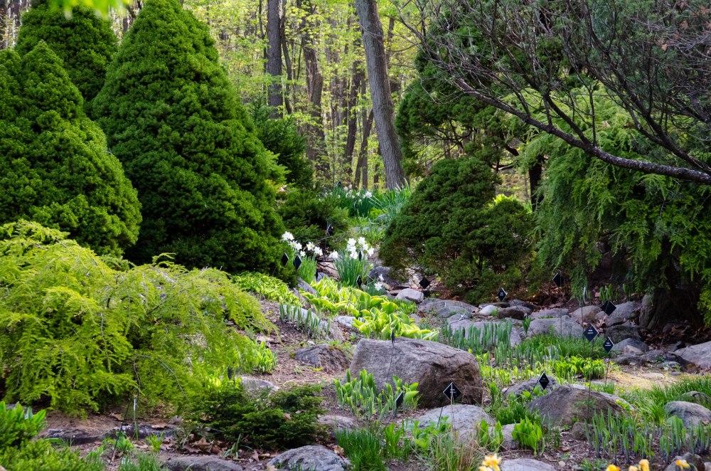 Hilly hosta rock garden.