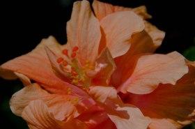 hot flowers 082