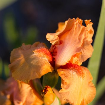 morning flowers 005