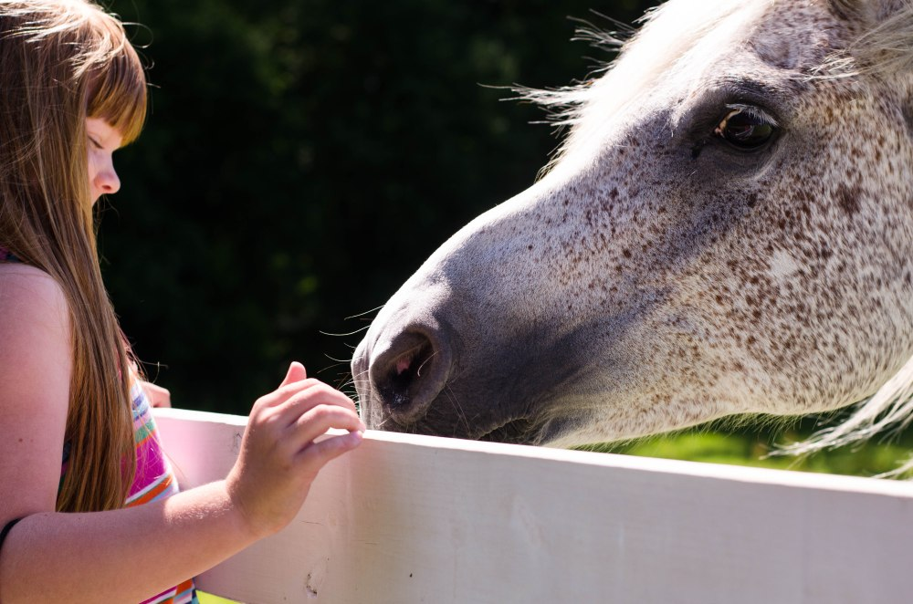 horses 052