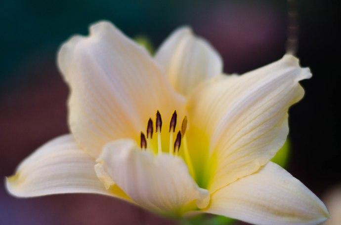 flowers 026