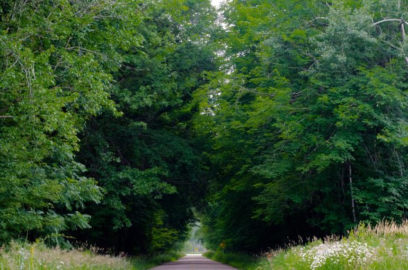 Quiet Country Road