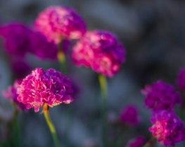 morning flowers 026