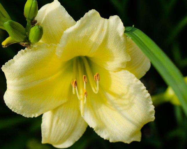 summer flowers 010