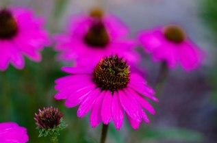 summer flowers 018