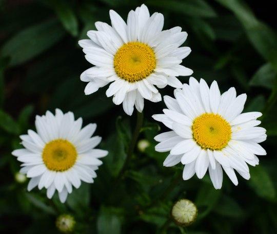 summer flowers 048