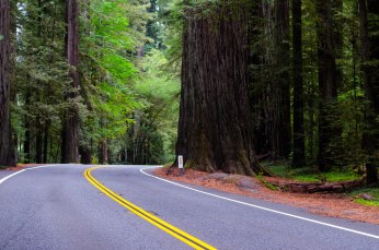 The drive to Crater Lake was through beautiful redwood forest.